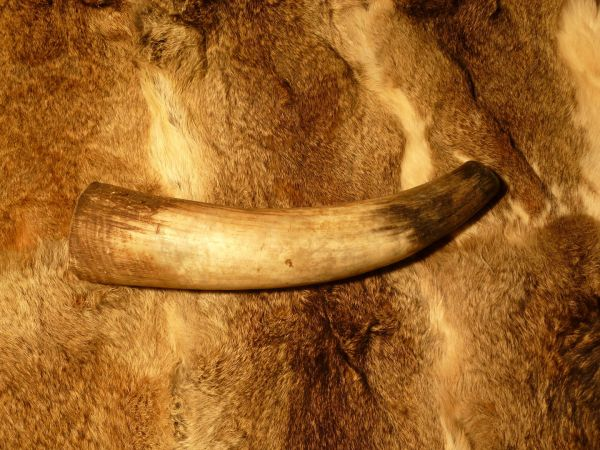 Rufhorn, natur ca. 700 - 990 ml 0,7 - 0,99l